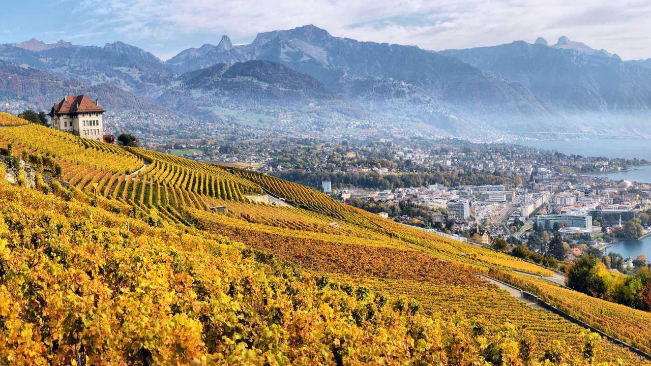 Lake Geneva and Lavaux Wine Region Sightseeing Tour from Lausanne