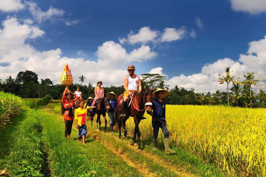 Scenic Ride through the rice field (Horse Riding)