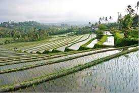 Balinese Daily Life Tour: Live Like A Farmer (with visit to Jatiluwih)