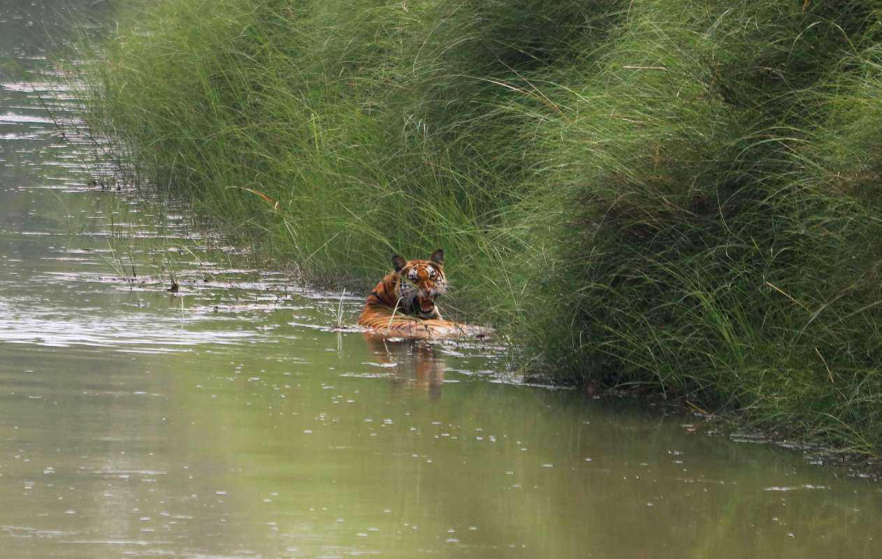 4-Day Bardiya National Park Wildlife Jungle Safari