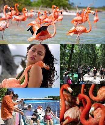 Eco Tour With Flamingos